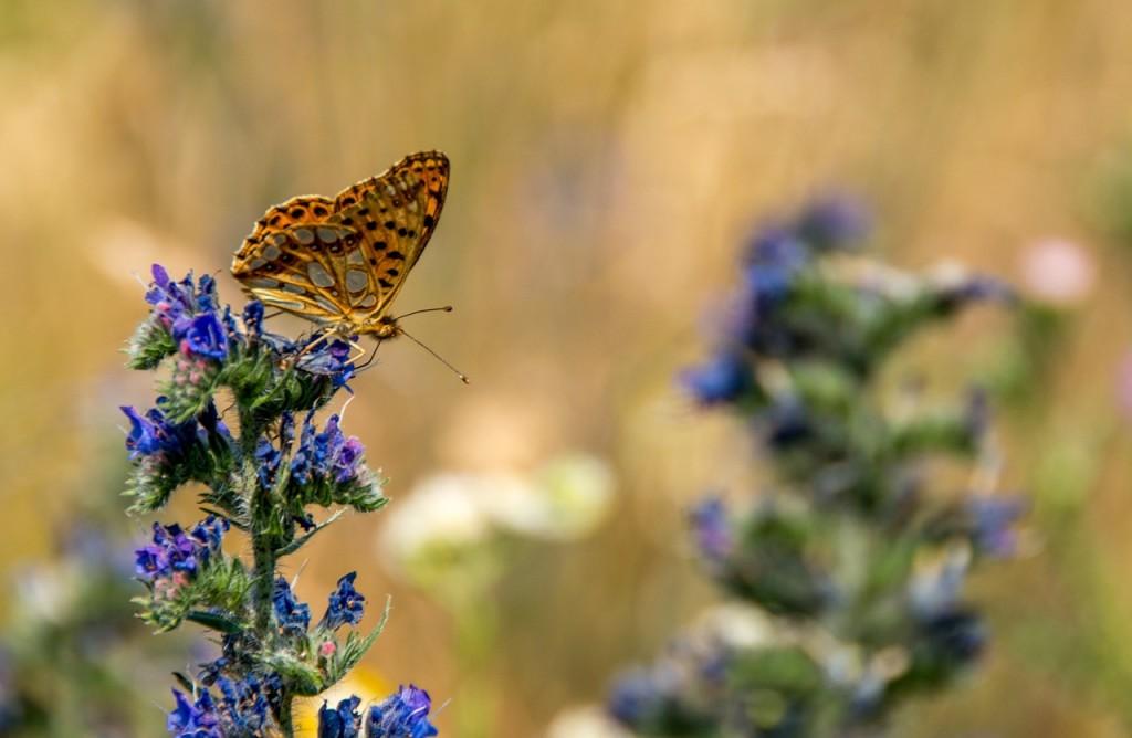 butterfly-828149_1280