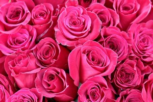 roses-1363895_640