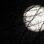 闇を愛する